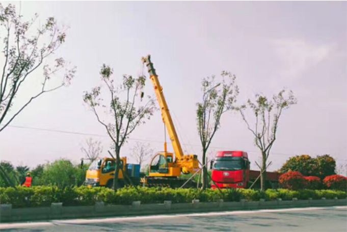 上海绿化工程